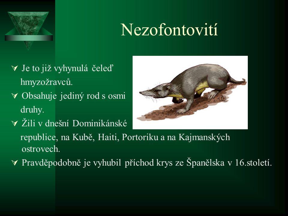 Nezofontovití  Je to již vyhynulá čeleď hmyzožravců.  Obsahuje jediný rod s osmi druhy.  Žili v dnešní Dominikánské republice, na Kubě, Haiti, Port