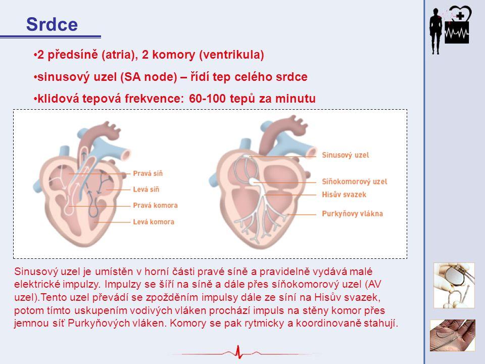Srdce 2 předsíně (atria), 2 komory (ventrikula) sinusový uzel (SA node) – řídí tep celého srdce klidová tepová frekvence: 60-100 tepů za minutu Sinuso