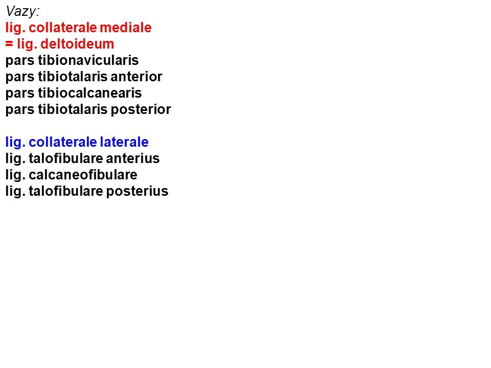 Vazy: lig. collaterale mediale = lig. deltoideum pars tibionavicularis pars tibiotalaris anterior pars tibiocalcanearis pars tibiotalaris posterior li