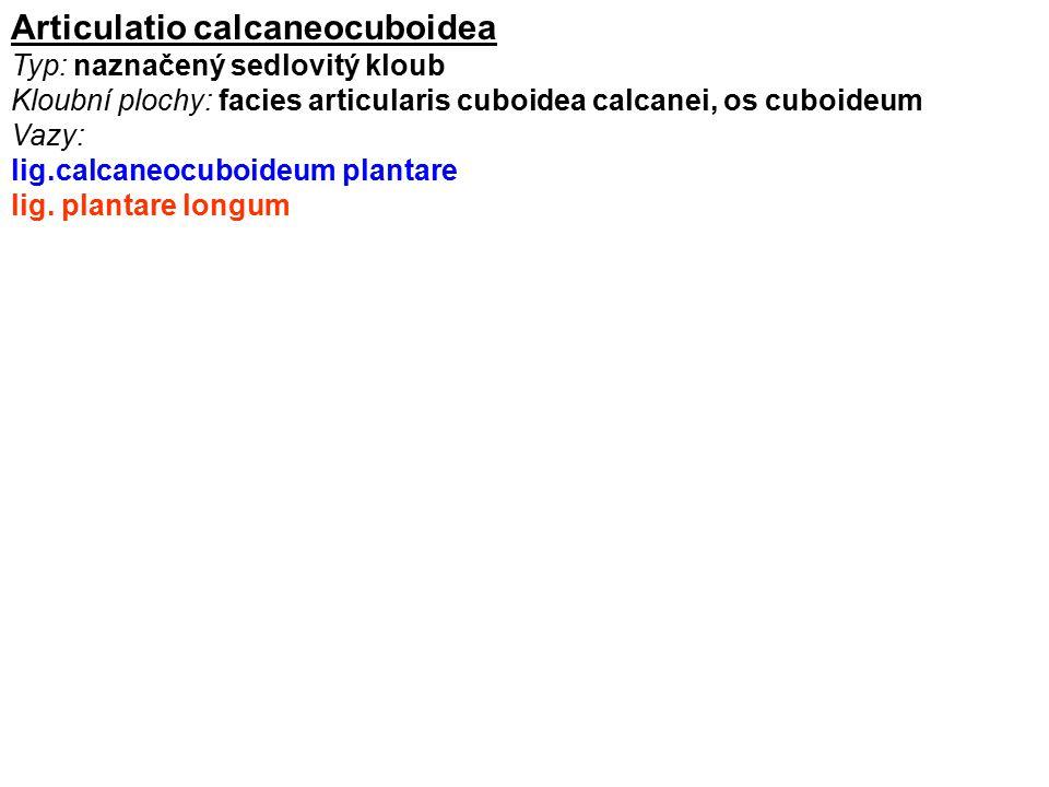 Articulatio calcaneocuboidea Typ: naznačený sedlovitý kloub Kloubní plochy: facies articularis cuboidea calcanei, os cuboideum Vazy: lig.calcaneocuboi