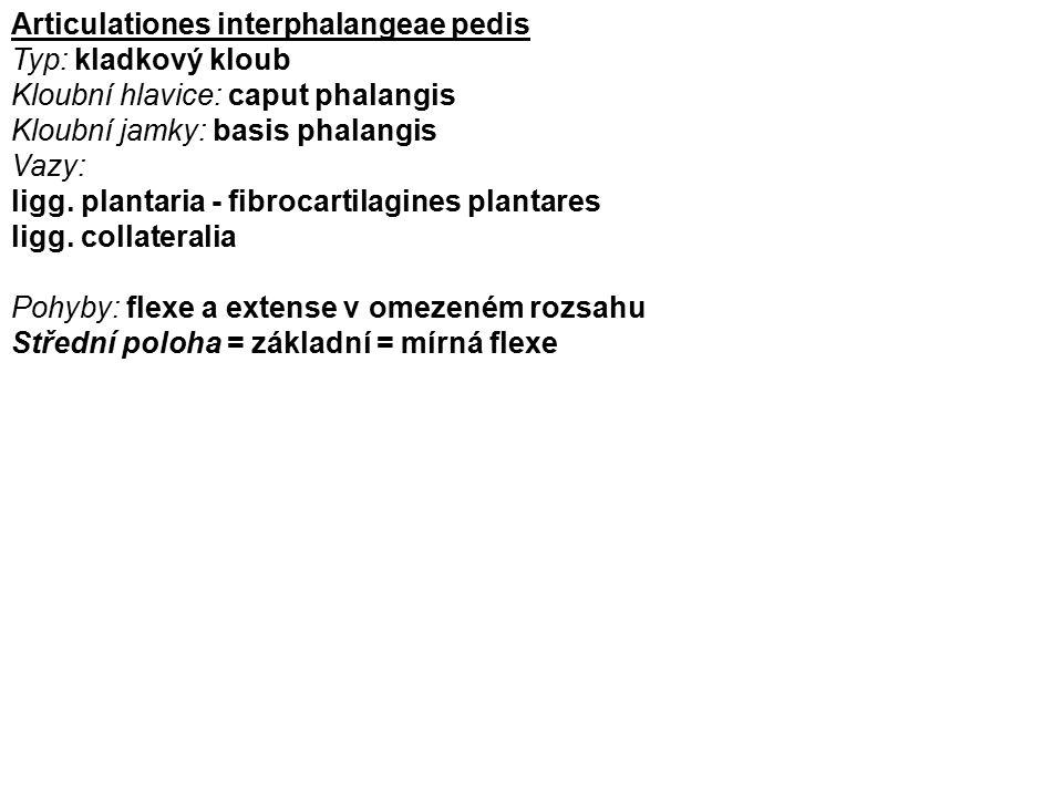 Articulationes interphalangeae pedis Typ: kladkový kloub Kloubní hlavice: caput phalangis Kloubní jamky: basis phalangis Vazy: ligg. plantaria - fibro