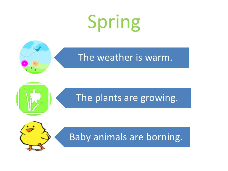 Spring The weather is warm. The plants are growing. Baby animals are borning.