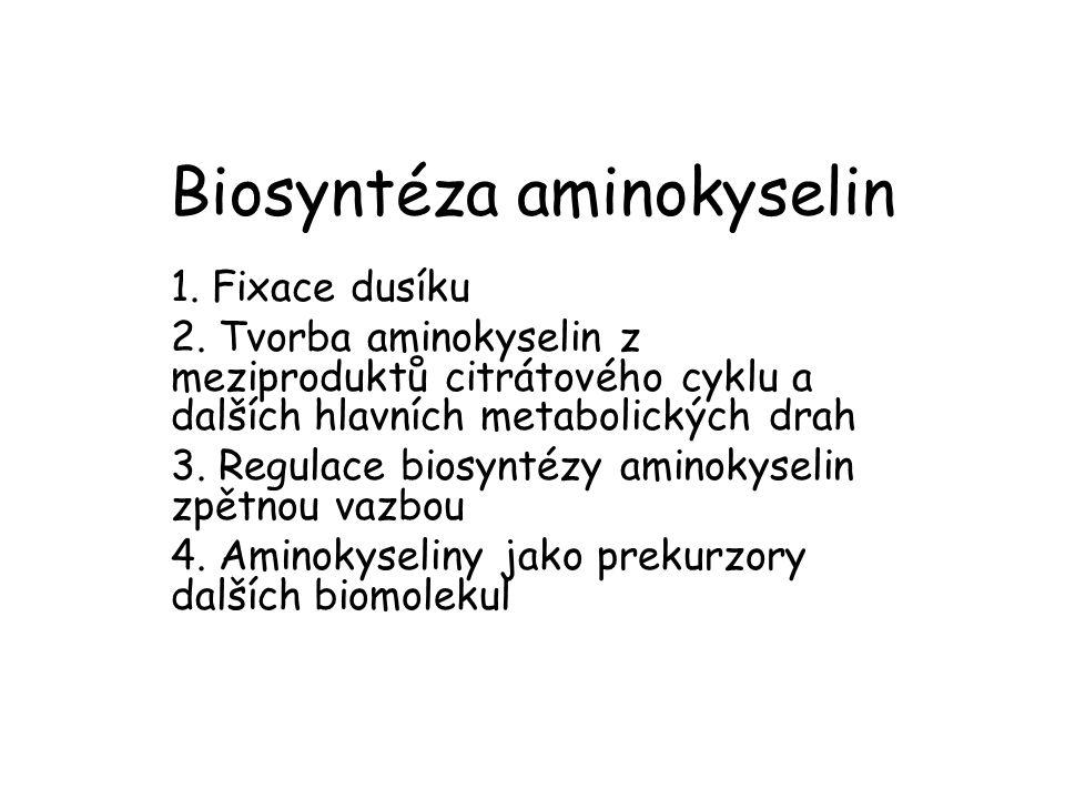 Biosyntéza aminokyselin 1. Fixace dusíku 2. Tvorba aminokyselin z meziproduktů citrátového cyklu a dalších hlavních metabolických drah 3. Regulace bio