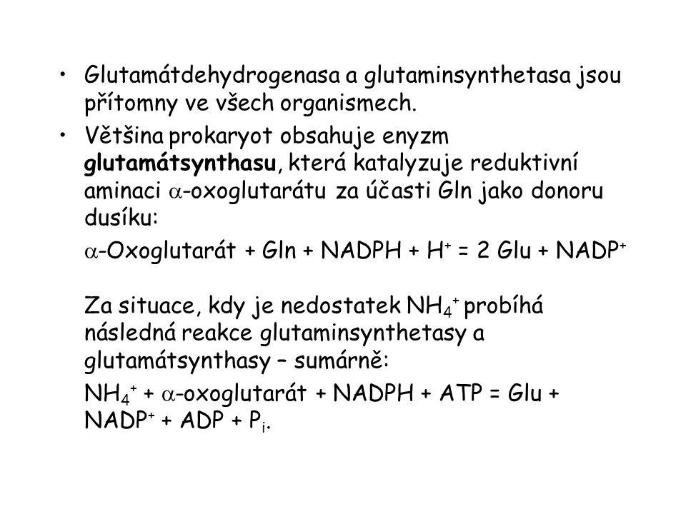 Glutamátdehydrogenasa a glutaminsynthetasa jsou přítomny ve všech organismech. Většina prokaryot obsahuje enyzm glutamátsynthasu, která katalyzuje red