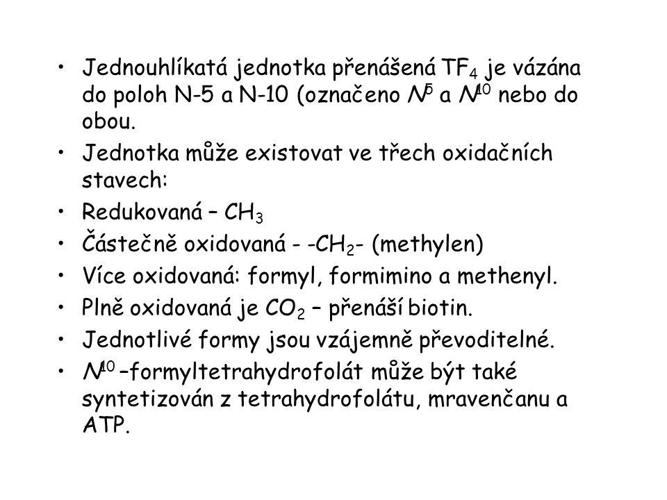 Jednouhlíkatá jednotka přenášená TF 4 je vázána do poloh N-5 a N-10 (označeno N 5 a N 10 nebo do obou. Jednotka může existovat ve třech oxidačních sta