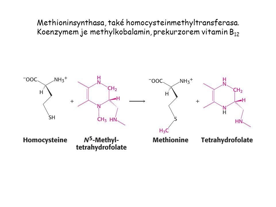 Methioninsynthasa, také homocysteinmethyltransferasa. Koenzymem je methylkobalamin, prekurzorem vitamin B 12