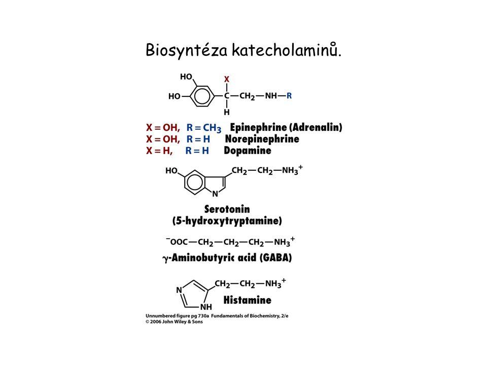 Biosyntéza katecholaminů.
