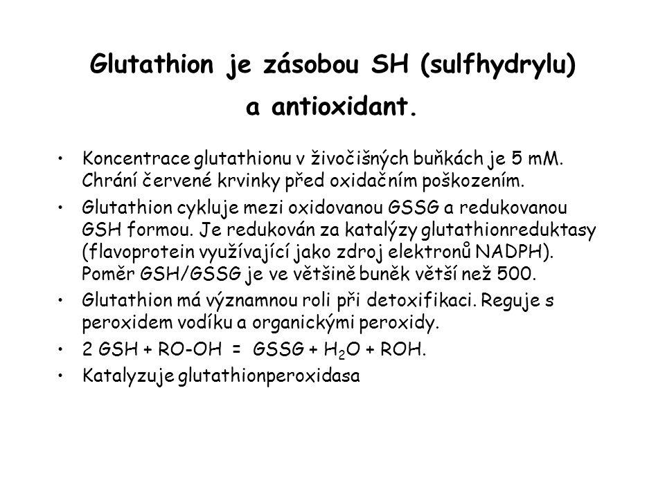 Glutathion je zásobou SH (sulfhydrylu) a antioxidant. Koncentrace glutathionu v živočišných buňkách je 5 mM. Chrání červené krvinky před oxidačním poš