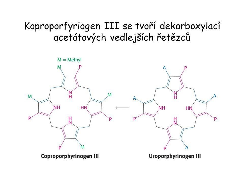 Koproporfyriogen III se tvoří dekarboxylací acetátových vedlejších řetězců