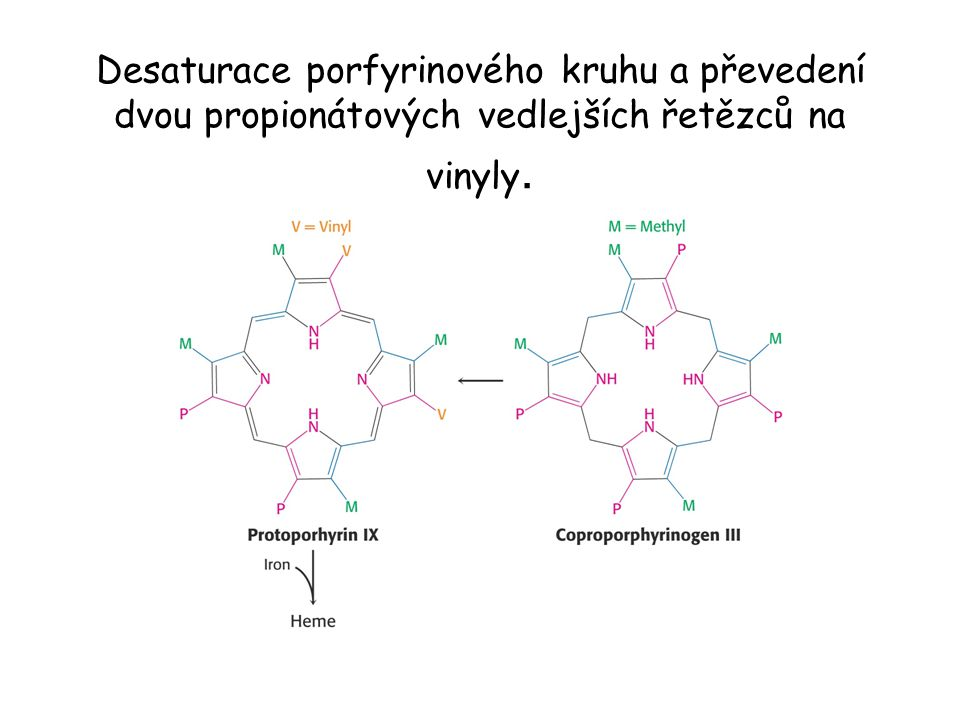 Desaturace porfyrinového kruhu a převedení dvou propionátových vedlejších řetězců na vinyly.
