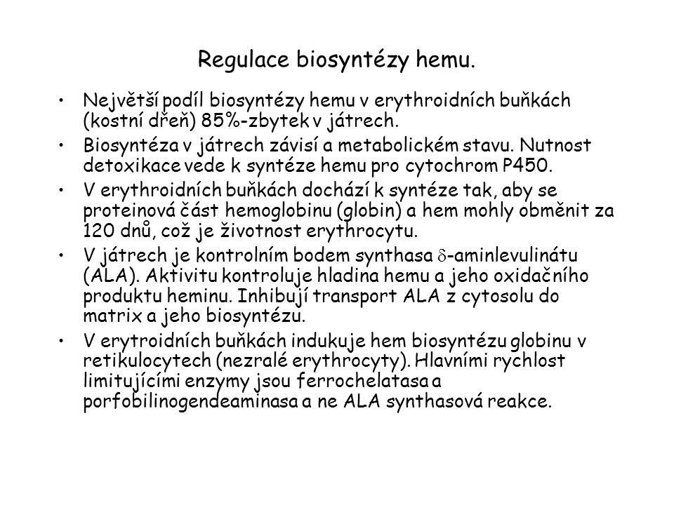 Regulace biosyntézy hemu. Největší podíl biosyntézy hemu v erythroidních buňkách (kostní dřeň) 85%-zbytek v játrech. Biosyntéza v játrech závisí a met
