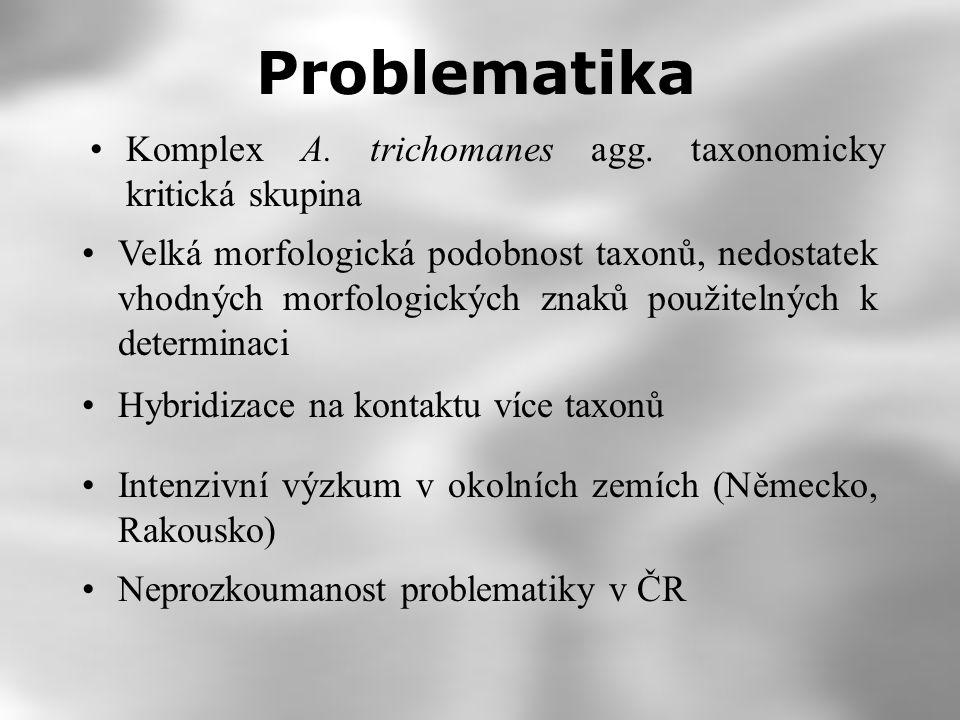 Problematika Velká morfologická podobnost taxonů, nedostatek vhodných morfologických znaků použitelných k determinaci Komplex A.