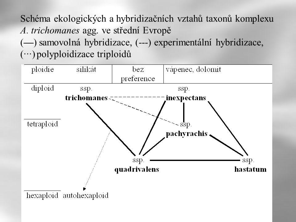 Schéma ekologických a hybridizačních vztahů taxonů komplexu A. trichomanes agg. ve střední Evropě (—) samovolná hybridizace, (---) experimentální hybr
