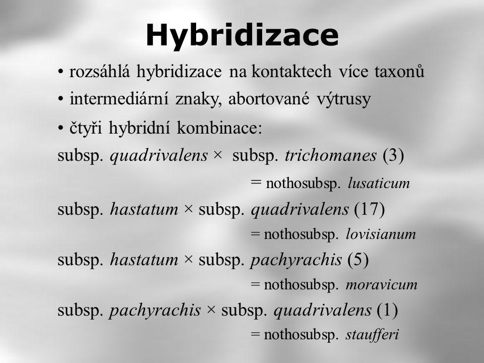 rozsáhlá hybridizace na kontaktech více taxonů intermediární znaky, abortované výtrusy Hybridizace čtyři hybridní kombinace: subsp. quadrivalens × sub
