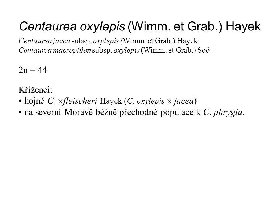 Centaurea oxylepis (Wimm. et Grab.) Hayek Centaurea jacea subsp. oxylepis (Wimm. et Grab.) Hayek Centaurea macroptilon subsp. oxylepis (Wimm. et Grab.