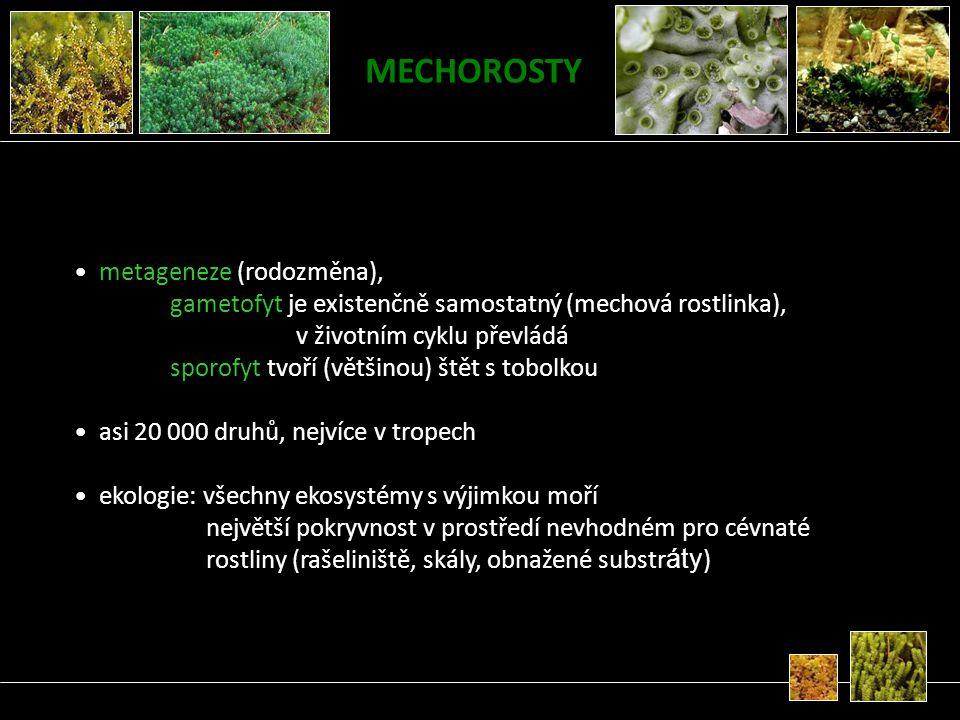 MECHOROSTY metageneze (rodozměna), gametofyt je existenčně samostatný (mechová rostlinka), v životním cyklu převládá sporofyt tvoří (většinou) štět s