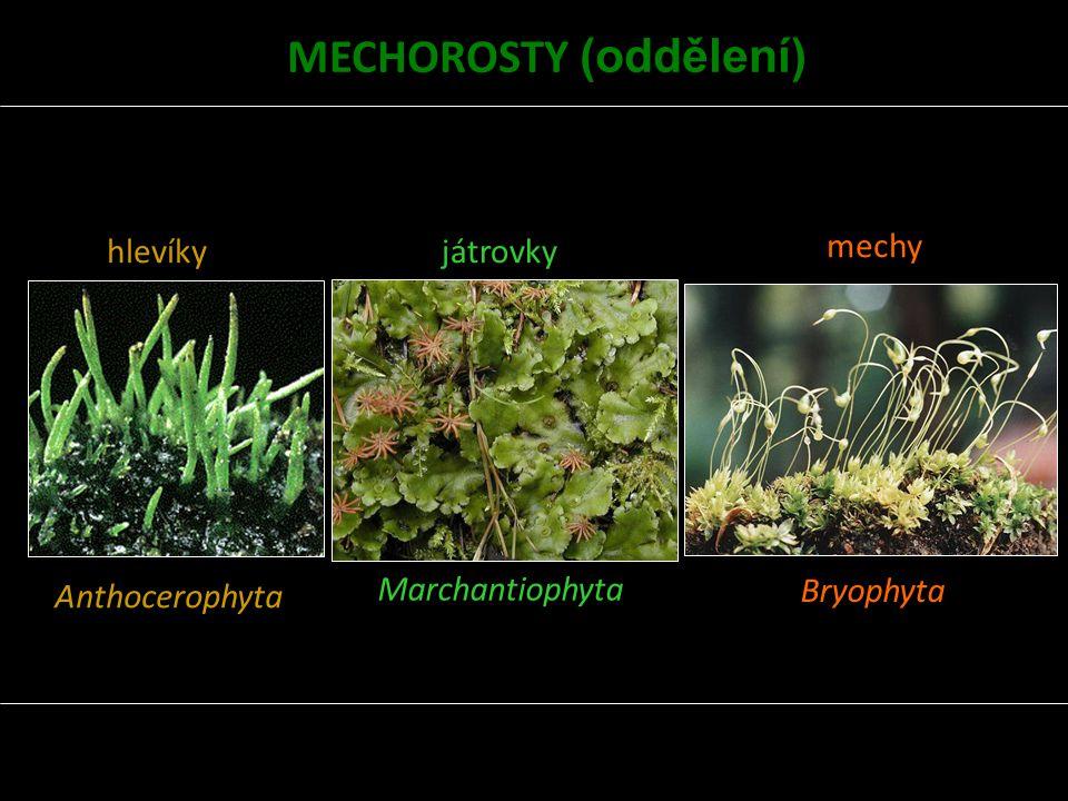 hlevíky Anthocerophyta játrovky Marchantiophyta mechy Bryophyta MECHOROSTY (oddělení)