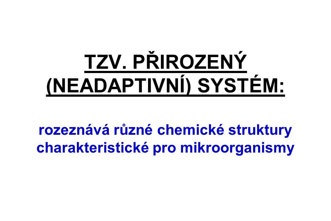TZV. PŘIROZENÝ (NEADAPTIVNÍ) SYSTÉM: rozeznává různé chemické struktury charakteristické pro mikroorganismy