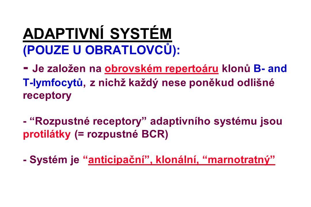 """ADAPTIVNÍ SYSTÉM (POUZE U OBRATLOVCŮ): - Je založen na obrovském repertoáru klonů B- and T-lymfocytů, z nichž každý nese poněkud odlišné receptory - """""""