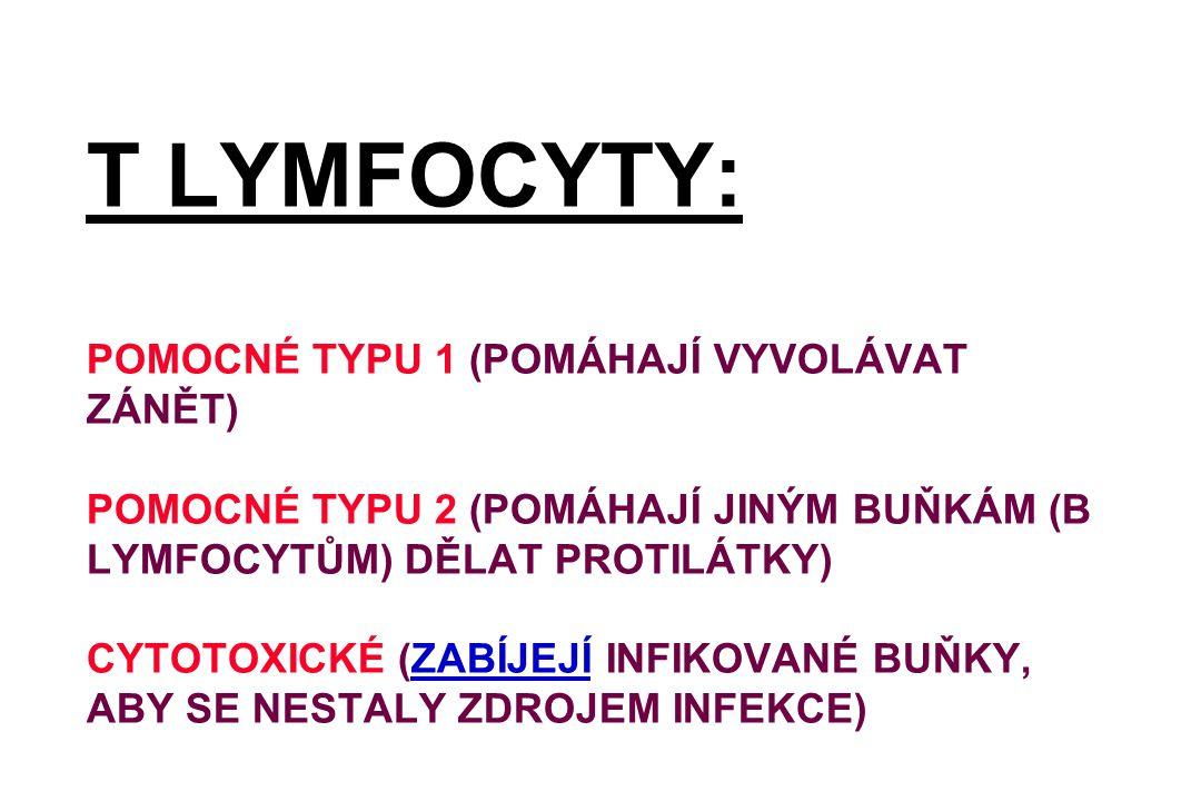 T LYMFOCYTY: POMOCNÉ TYPU 1 (POMÁHAJÍ VYVOLÁVAT ZÁNĚT) POMOCNÉ TYPU 2 (POMÁHAJÍ JINÝM BUŇKÁM (B LYMFOCYTŮM) DĚLAT PROTILÁTKY) CYTOTOXICKÉ (ZABÍJEJÍ IN