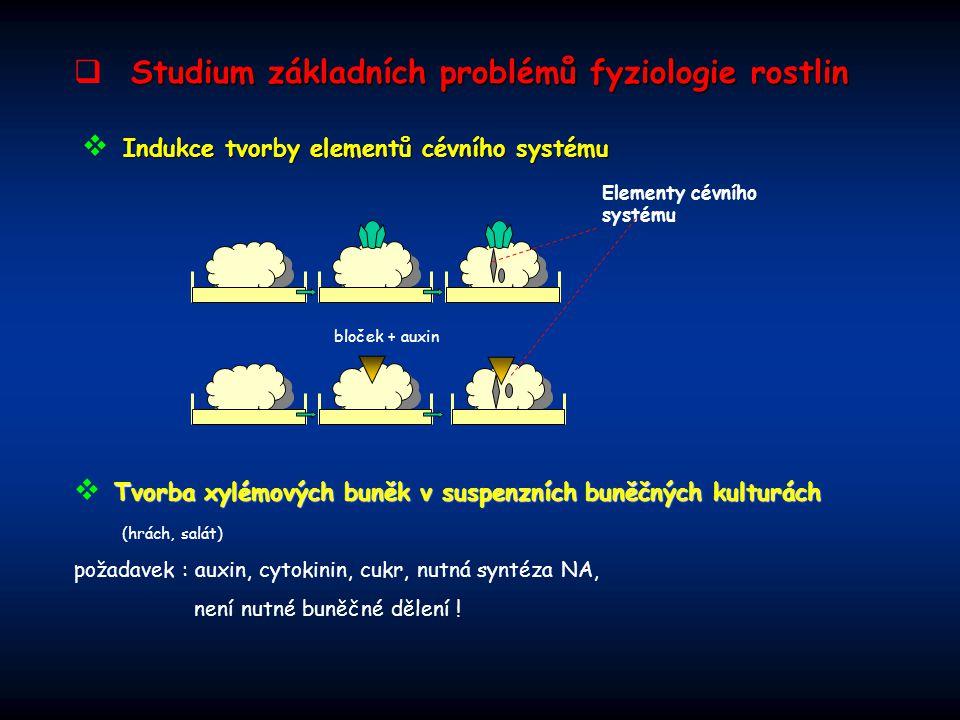 Rediferenciace mezofylových buněk  Rediferenciace mezofylových buněk ( Zinnia elegans) 96 hod NAA + BA Xylémové buňky  Signální účinek hladiny sacharidů - buněčné kultury šeříku (IAA): Lze studovat:  povahu signálu, který proces spouští  modulování signálu  vliv na syntézu makromolekul 1% sacharózy …………………..