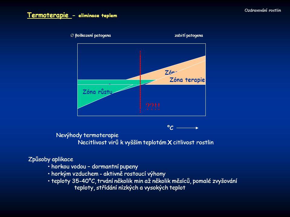 Termoterapie - eliminace teplem Ozdravování rostlin °C Zóna růstu Zóna terapie  Poškození patogenazabití patogena Způsoby aplikace horkou vodou – dor