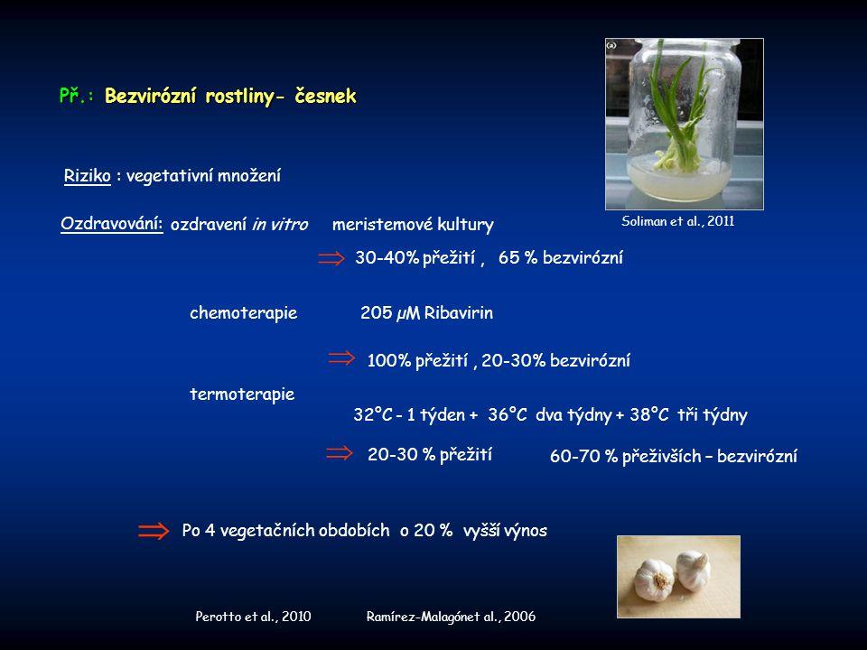 Př.: Bezvirózní rostliny- česnek Ozdravování: Riziko : vegetativní množení termoterapie 60-70 % přeživších – bezvirózní 20-30 % přežití  32°C - 1 týd