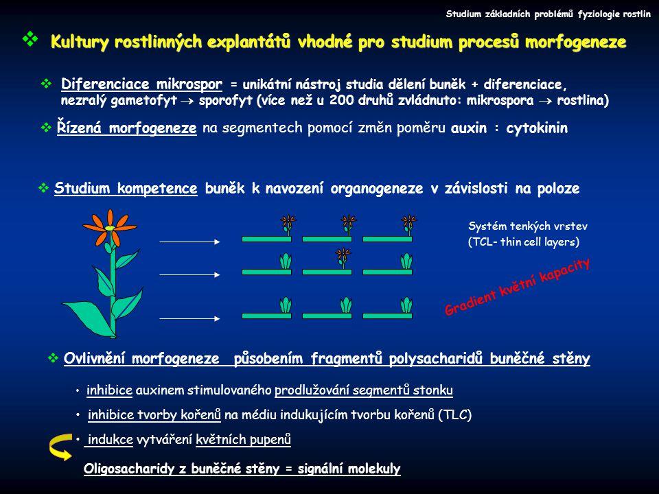 Ozdravení pomocí kultivace explantátů Ozdravování rostlin  Kultivace meristemových kultur  větší šance na získání bezvirózní rostliny,  Kultivace vzrostných vrcholů (apikální meristem + 1-3 listová primordia)  větší šance na přežití Ne vždy je meristem viruprostý  kombinace metod termoterapie a kultivace apikálních meristemů působit na mateřskou rostlinu působit na explantát postup opakovat  Chemoterapie Chemoterapie celých rostlin často nevede k cíli … ošetření explantátových kultur in vitro lepší výsledky Přítomnost R.R.