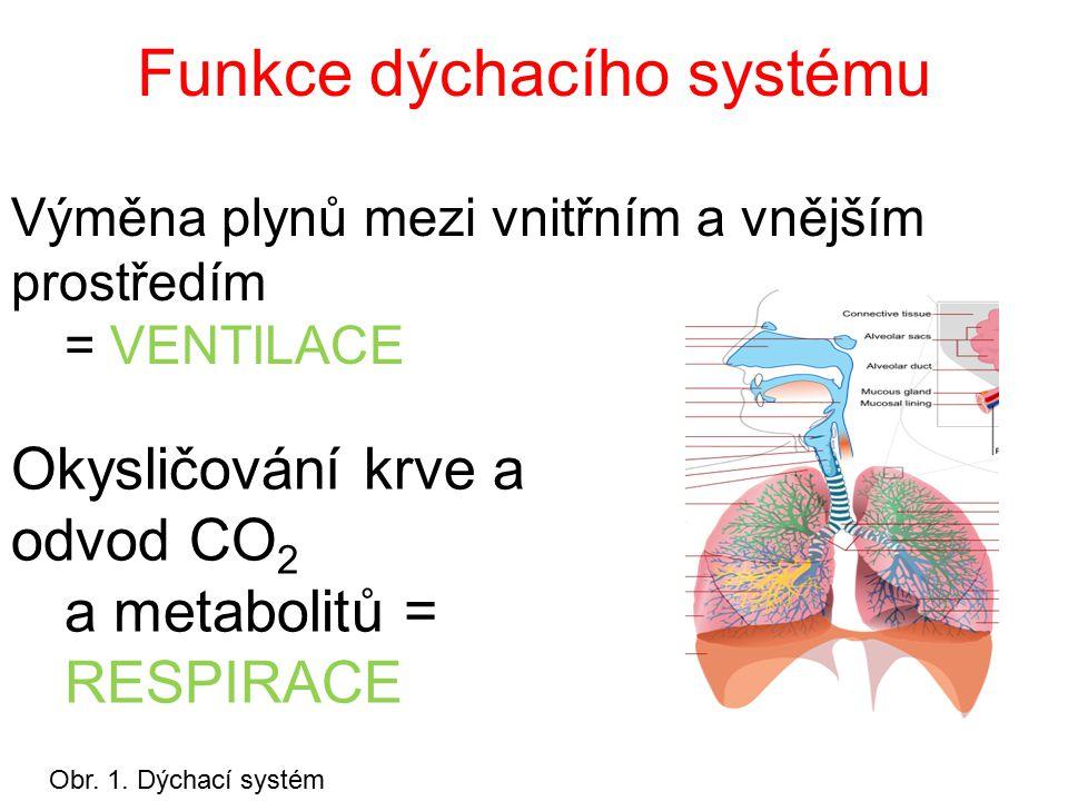 Funkce dýchacího systému Okysličování krve a odvod CO 2 a metabolitů = RESPIRACE Výměna plynů mezi vnitřním a vnějším prostředím = VENTILACE Obr.