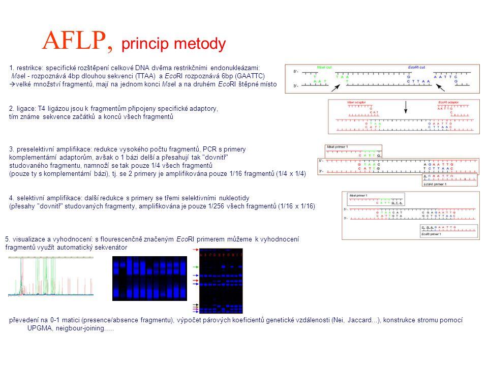 AFLP, princip metody 1. restrikce: specifické rozštěpení celkové DNA dvěma restrikčními endonukleázami: MseI - rozpoznává 4bp dlouhou sekvenci (TTAA)