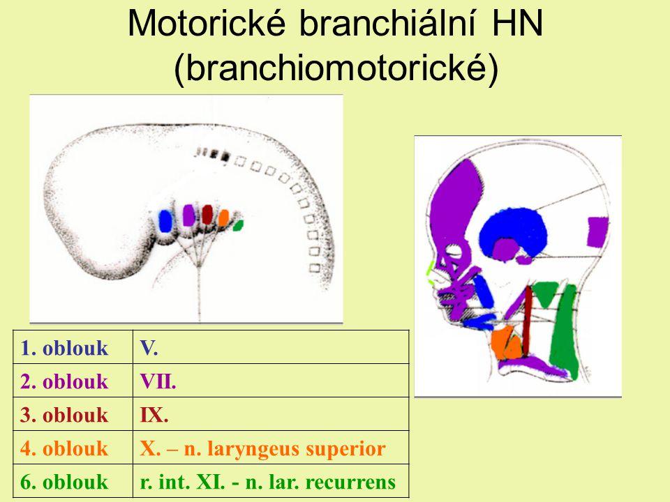 Motorické branchiální HN (branchiomotorické) 1.obloukV.