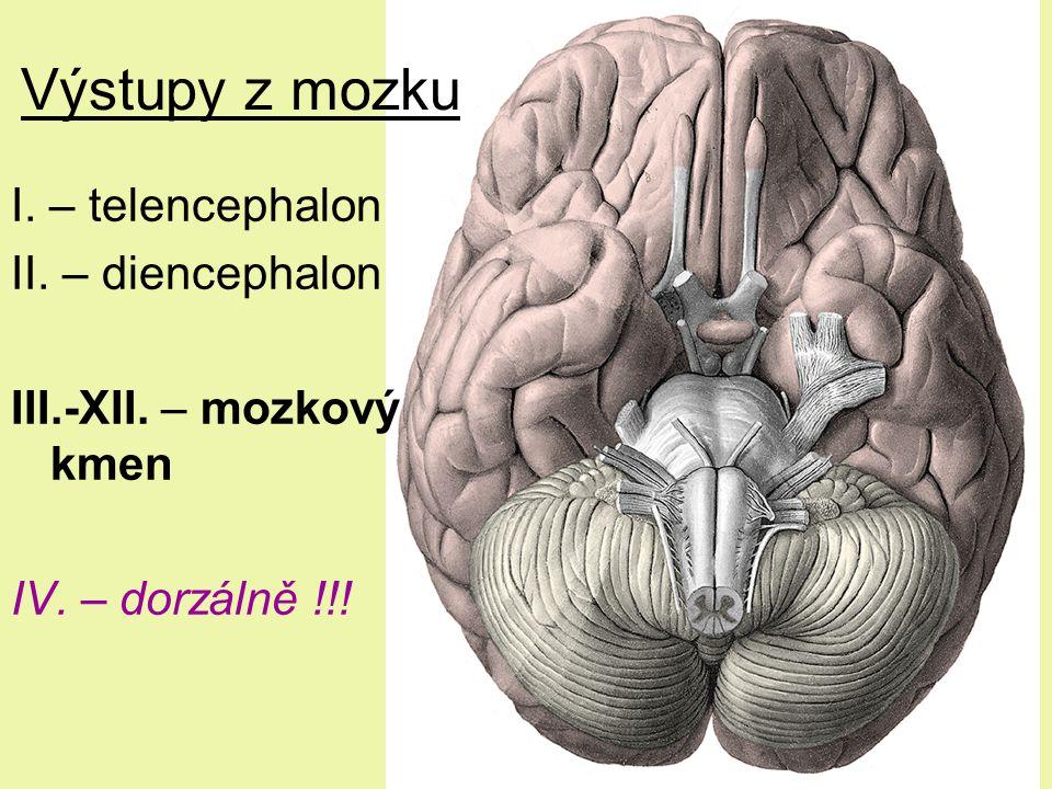 Výstupy z mozku I. – telencephalon II. – diencephalon III.-XII. – mozkový kmen IV. – dorzálně !!!