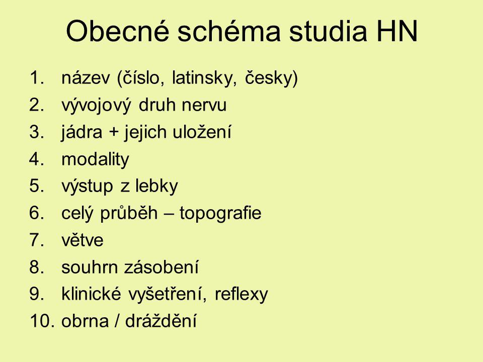 Obecné schéma studia HN 1.název (číslo, latinsky, česky) 2.vývojový druh nervu 3.jádra + jejich uložení 4.modality 5.výstup z lebky 6.celý průběh – topografie 7.větve 8.souhrn zásobení 9.klinické vyšetření, reflexy 10.obrna / dráždění