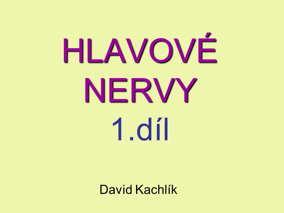 HLAVOVÉ NERVY HLAVOVÉ NERVY 1.díl David Kachlík