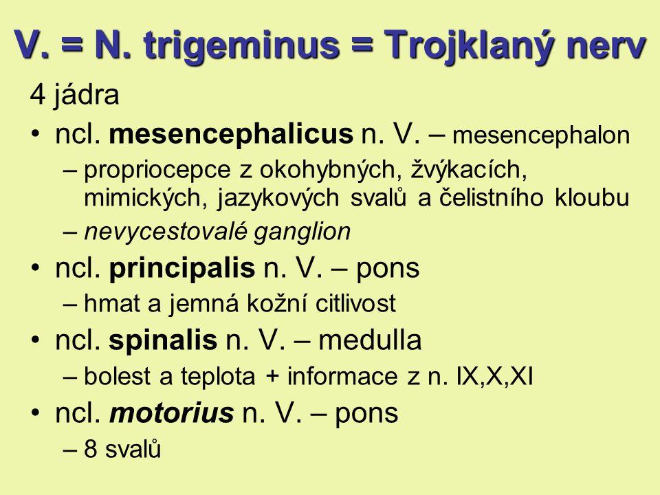 V.= N.trigeminus = Trojklaný nerv V. = N. trigeminus = Trojklaný nerv 4 jádra ncl.