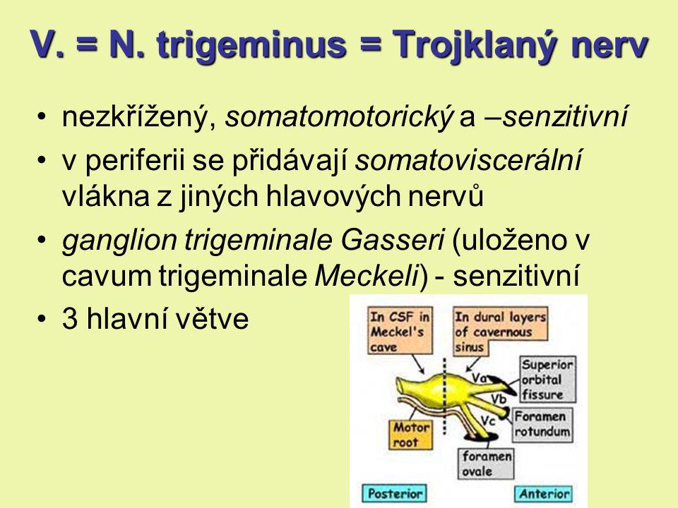 nezkřížený, somatomotorický a –senzitivní v periferii se přidávají somatoviscerální vlákna z jiných hlavových nervů ganglion trigeminale Gasseri (uloženo v cavum trigeminale Meckeli) - senzitivní 3 hlavní větve V.= N.