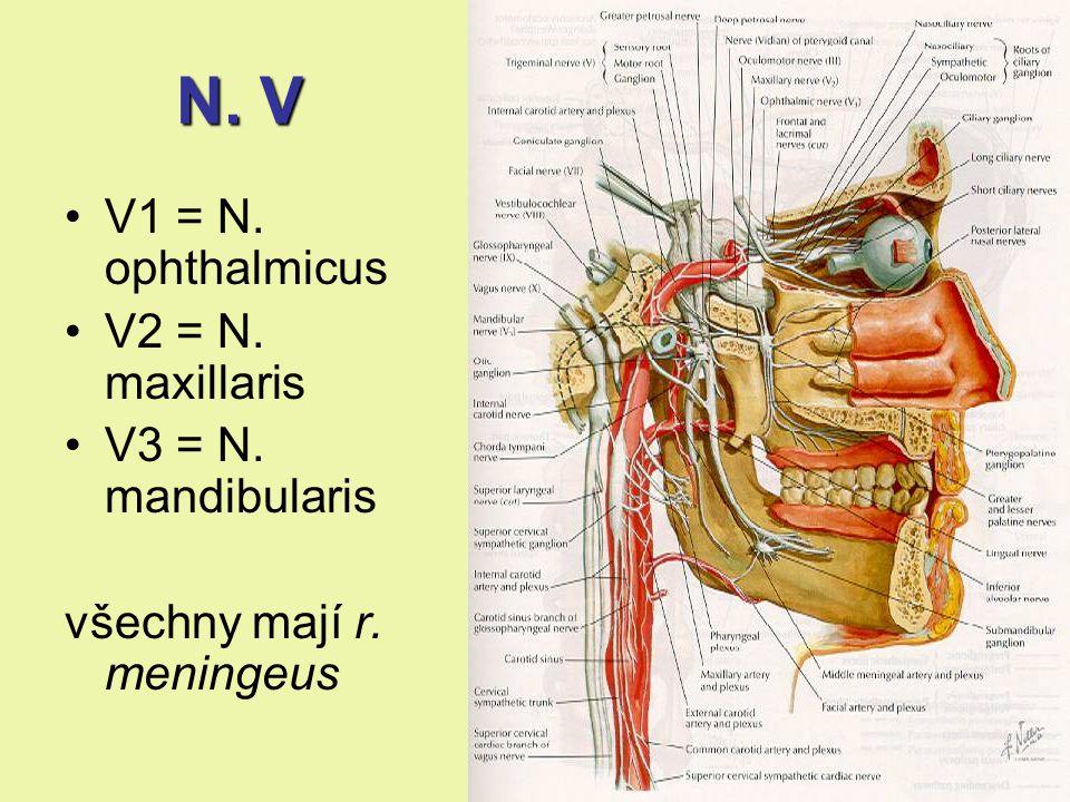 N. V V1 = N. ophthalmicus V2 = N. maxillaris V3 = N. mandibularis všechny mají r. meningeus