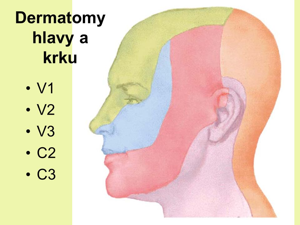 Dermatomy hlavy a krku V1 V2 V3 C2 C3