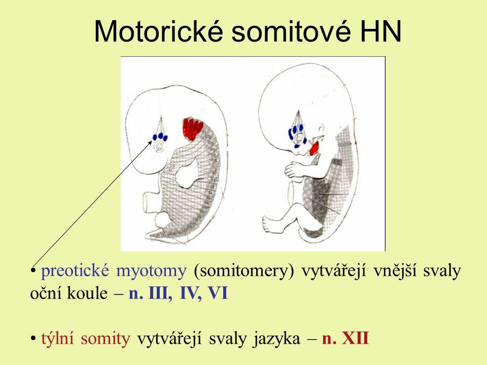 Motorické somitové HN preotické myotomy (somitomery) vytvářejí vnější svaly oční koule – n.