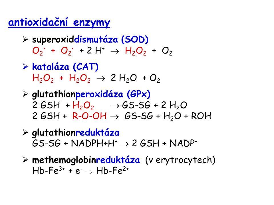 antioxidační enzymy  superoxiddismutáza (SOD) O 2 + O 2 + 2 H +  H 2 O 2 + O 2  kataláza (CAT) H 2 O 2 + H 2 O 2  2 H 2 O + O 2  glutathionperoxi