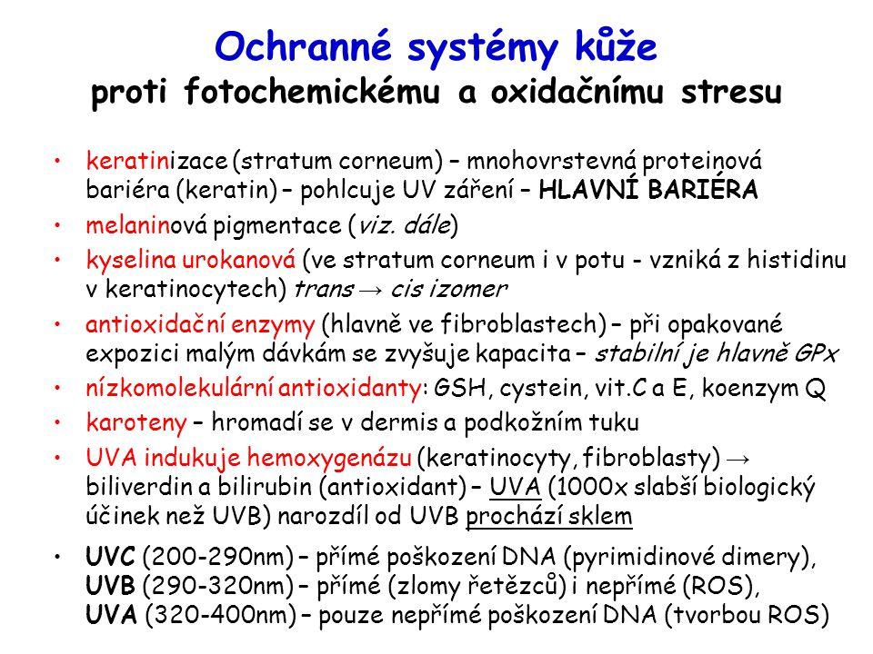 Ochranné systémy kůže proti fotochemickému a oxidačnímu stresu keratinizace (stratum corneum) – mnohovrstevná proteinová bariéra (keratin) – pohlcuje