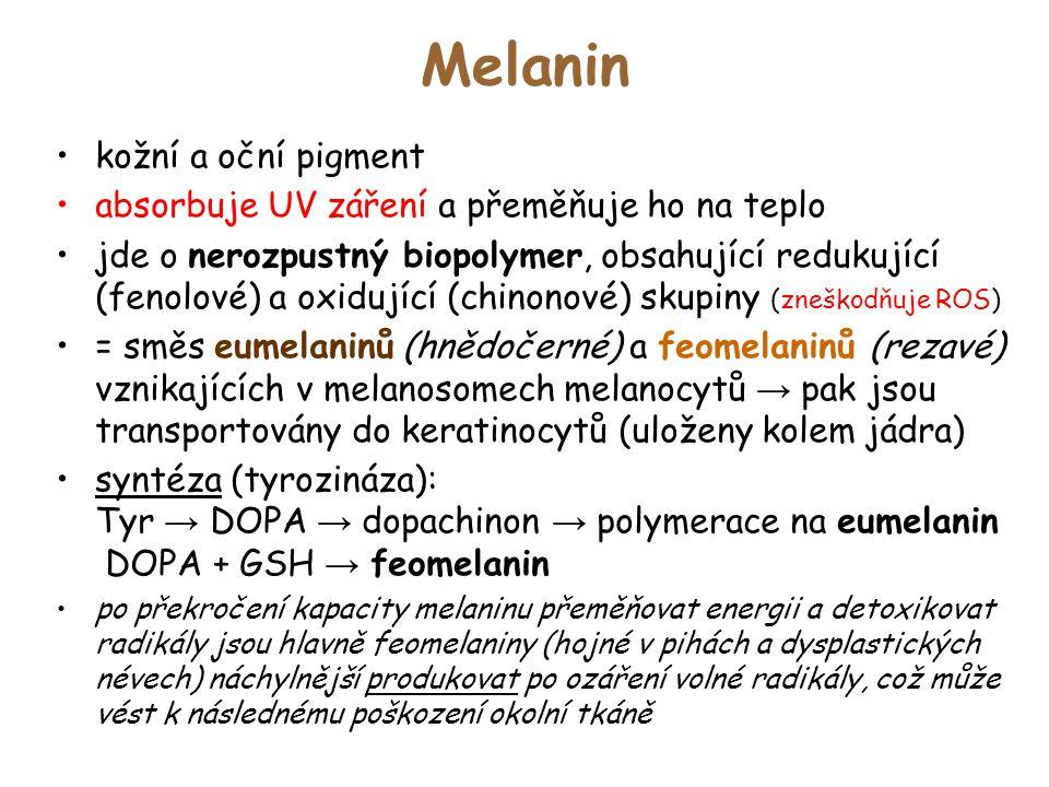 Melanin kožní a oční pigment absorbuje UV záření a přeměňuje ho na teplo jde o nerozpustný biopolymer, obsahující redukující (fenolové) a oxidující (c