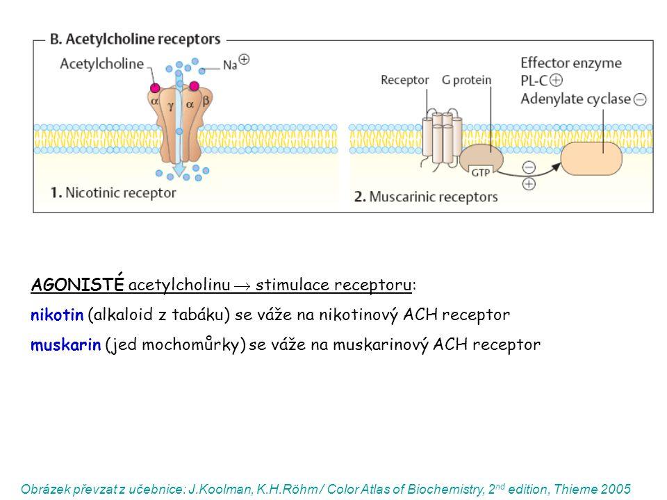 AGONISTÉ acetylcholinu  stimulace receptoru: nikotin (alkaloid z tabáku) se váže na nikotinový ACH receptor muskarin (jed mochomůrky) se váže na musk