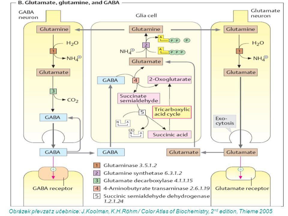 Obrázek převzat z učebnice: J.Koolman, K.H.Röhm / Color Atlas of Biochemistry, 2 nd edition, Thieme 2005