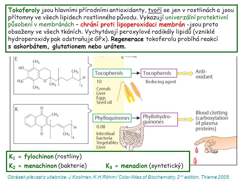 Melanin kožní a oční pigment absorbuje UV záření a přeměňuje ho na teplo jde o nerozpustný biopolymer, obsahující redukující (fenolové) a oxidující (chinonové) skupiny (zneškodňuje ROS) = směs eumelaninů (hnědočerné) a feomelaninů (rezavé) vznikajících v melanosomech melanocytů → pak jsou transportovány do keratinocytů (uloženy kolem jádra) syntéza (tyrozináza): Tyr → DOPA → dopachinon → polymerace na eumelanin DOPA + GSH → feomelanin po překročení kapacity melaninu přeměňovat energii a detoxikovat radikály jsou hlavně feomelaniny (hojné v pihách a dysplastických névech) náchylnější produkovat po ozáření volné radikály, což může vést k následnému poškození okolní tkáně