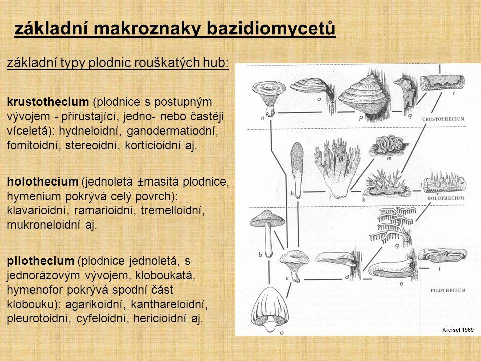 základní typy plodnic rouškatých hub: krustothecium (plodnice s postupným vývojem - přirůstající, jedno- nebo častěji víceletá): hydneloidní, ganodermatiodní, fomitoidní, stereoidní, korticioidní aj.