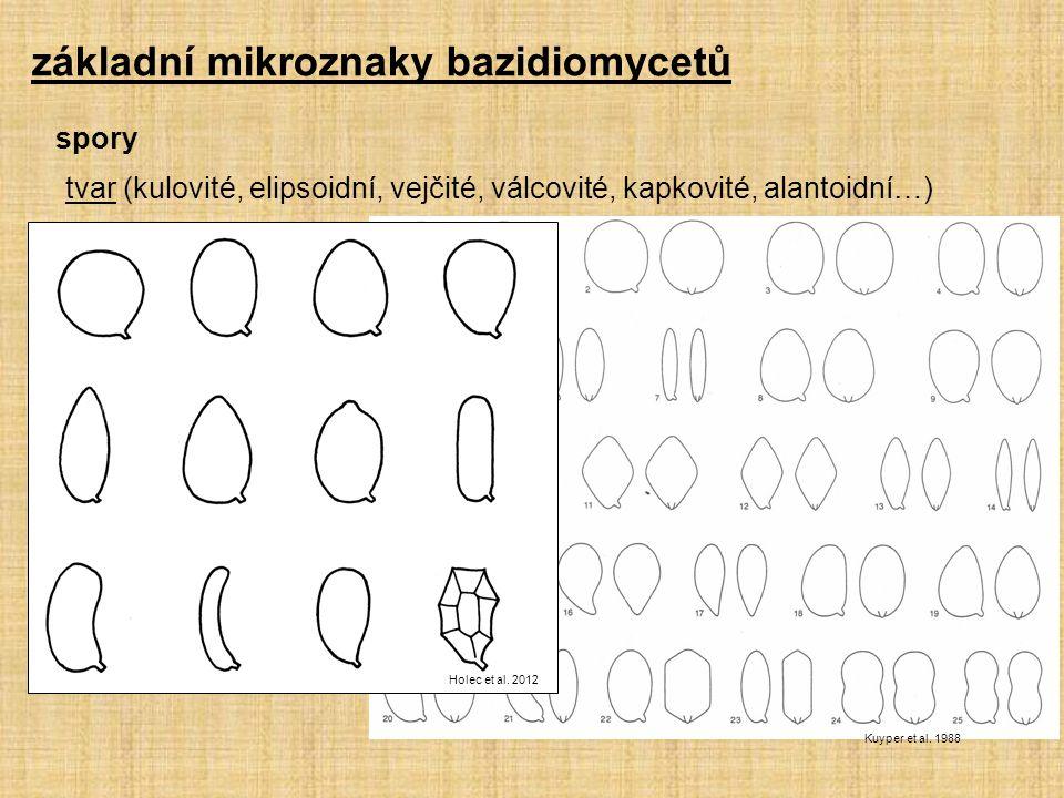 tvar (kulovité, elipsoidní, vejčité, válcovité, kapkovité, alantoidní…) Kuyper et al. 1988 základní mikroznaky bazidiomycetů spory Holec et al. 2012