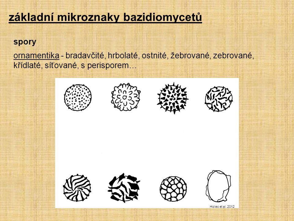 ornamentika - bradavčité, hrbolaté, ostnité, žebrované, zebrované, křídlaté, síťované, s perisporem… základní mikroznaky bazidiomycetů spory Holec et al.