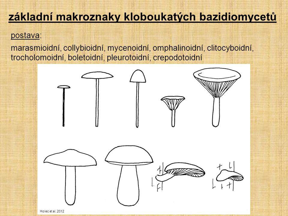 základní makroznaky kloboukatých bazidiomycetů postava: marasmioidní, collybioidní, mycenoidní, omphalinoidní, clitocyboidní, trocholomoidní, boletoidní, pleurotoidní, crepodotoidní Holec et al.
