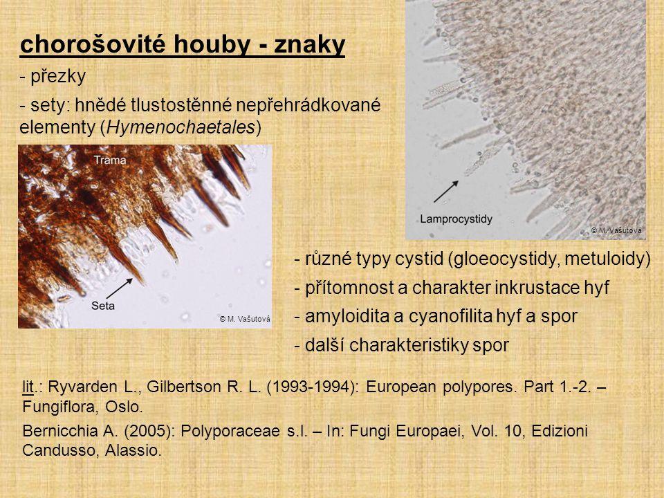 - přezky - sety: hnědé tlustostěnné nepřehrádkované elementy (Hymenochaetales) © M. Vašutová chorošovité houby - znaky - různé typy cystid (gloeocysti